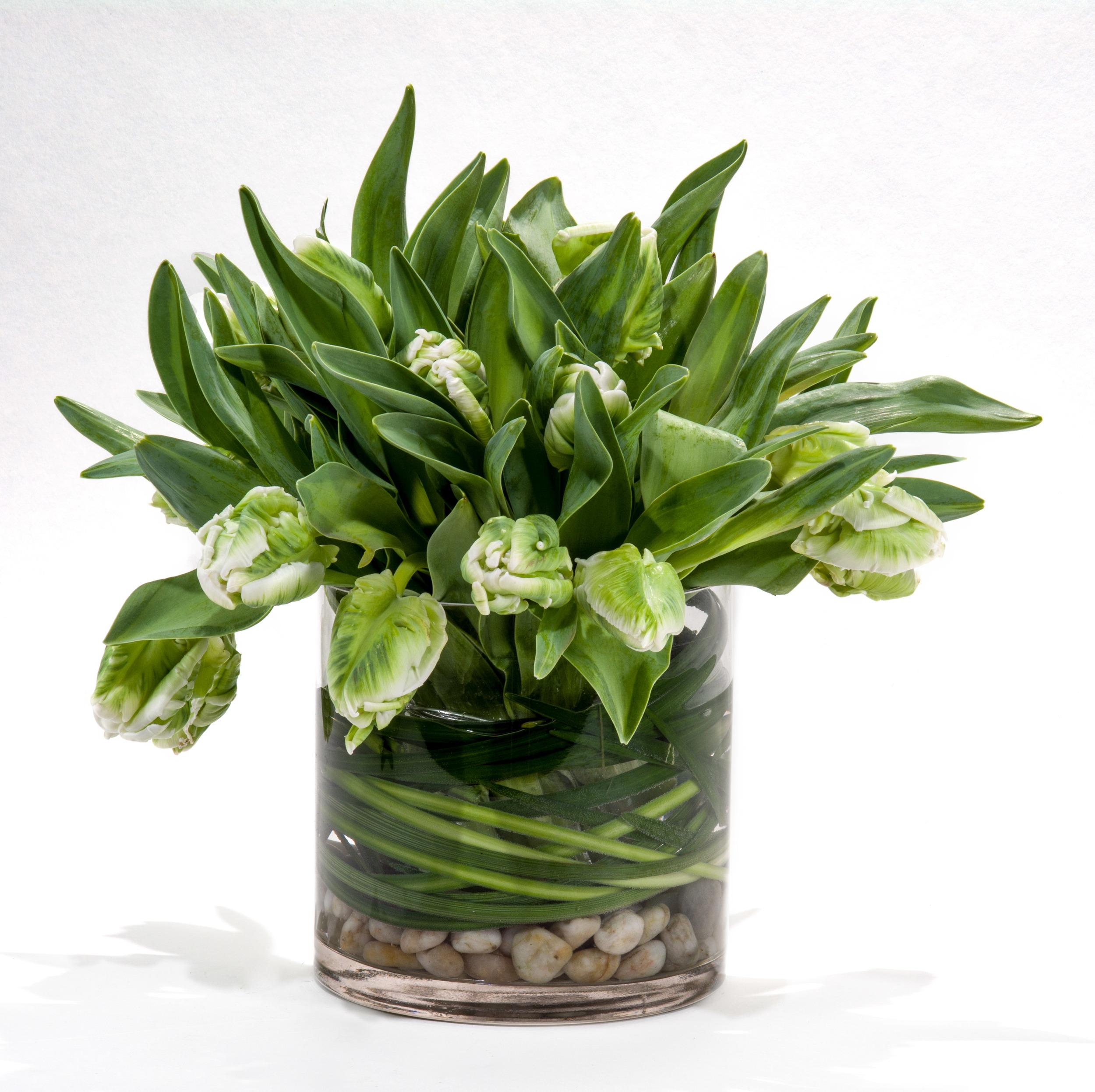 Green tulips - full size hi res-1.jpg