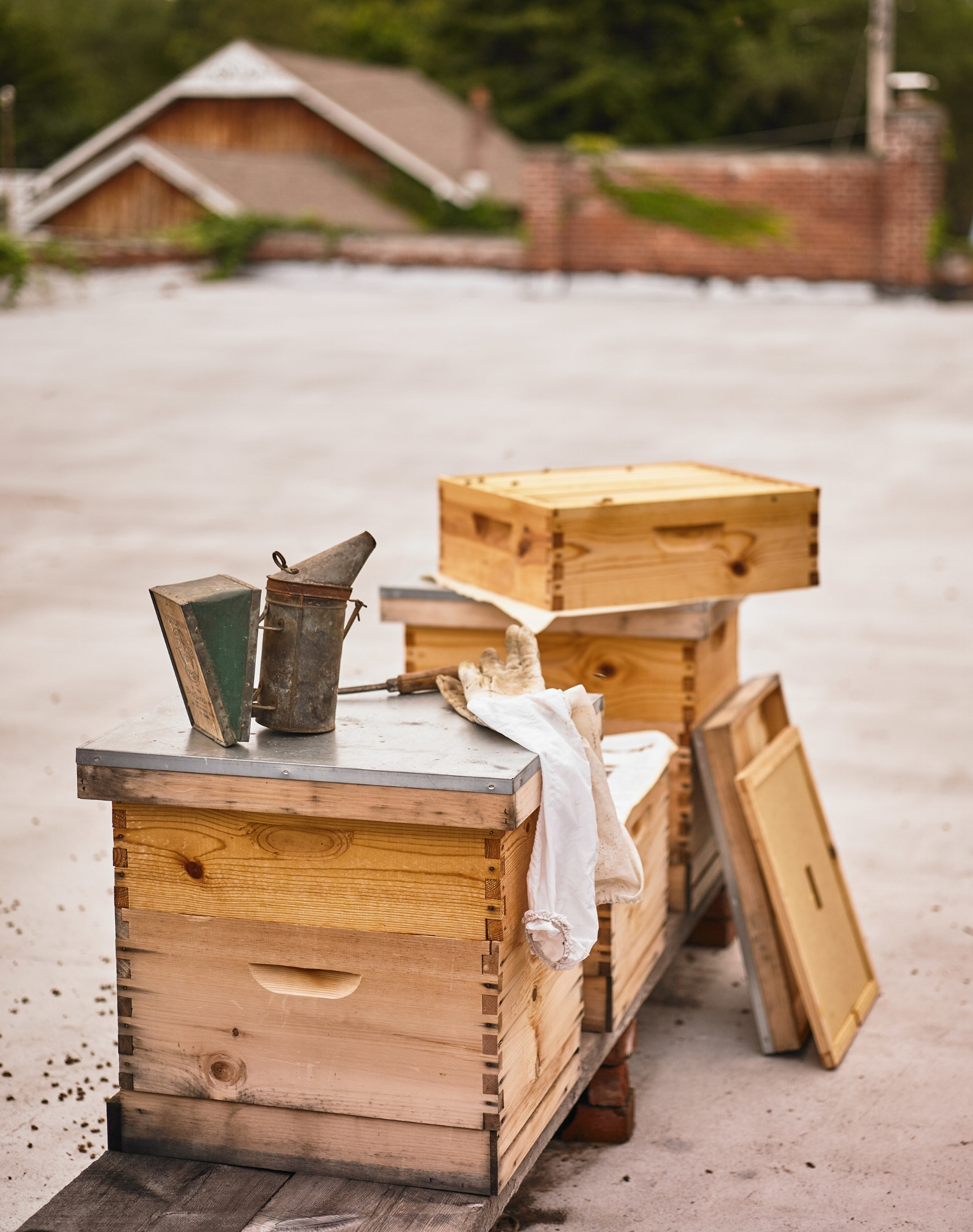 Beekeeping/ Introduction to the Hive & Bee behavior - private tour of our forest apiarythrough FallNarrowsburg NY