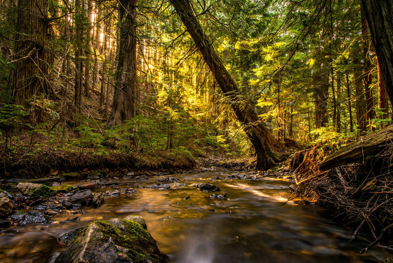 Dorado Forest