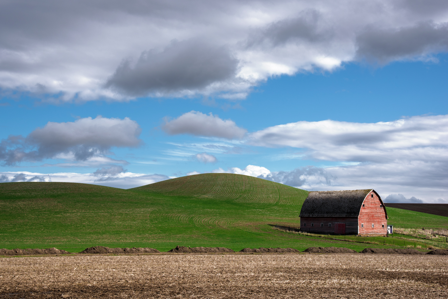 Spring Colors of the Palouse