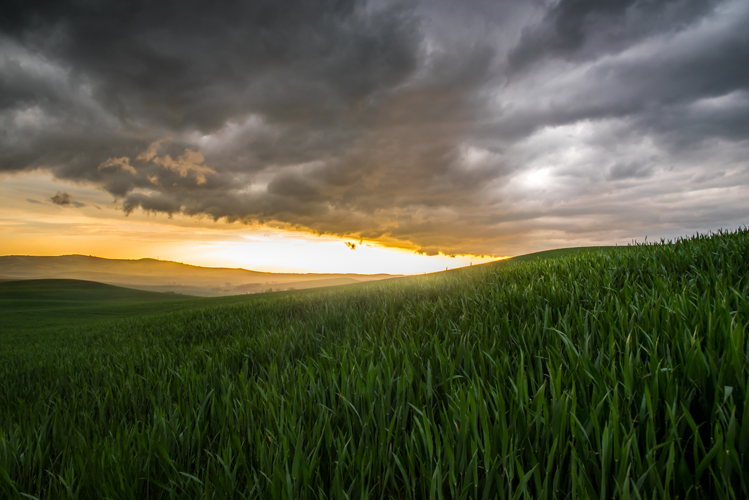 Spring Wheat and Storm Clouds