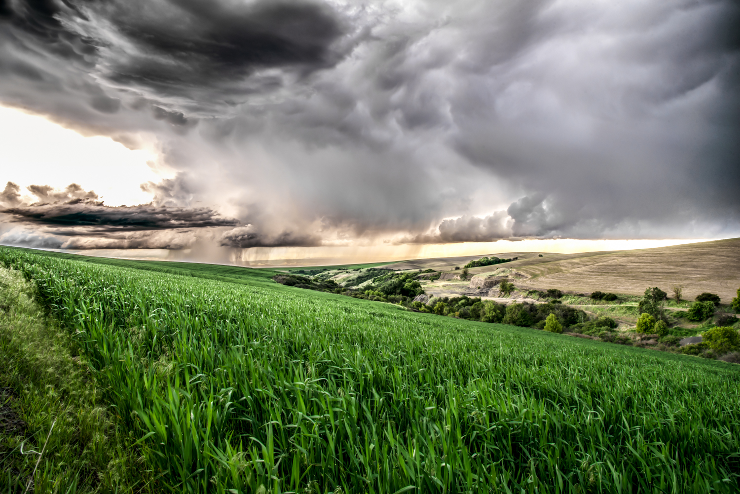 Stormy Skies and Summer Wheat Fields