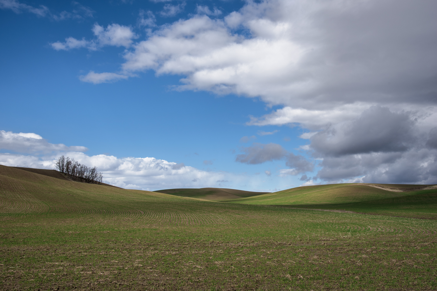 Spring Palouse Contrast