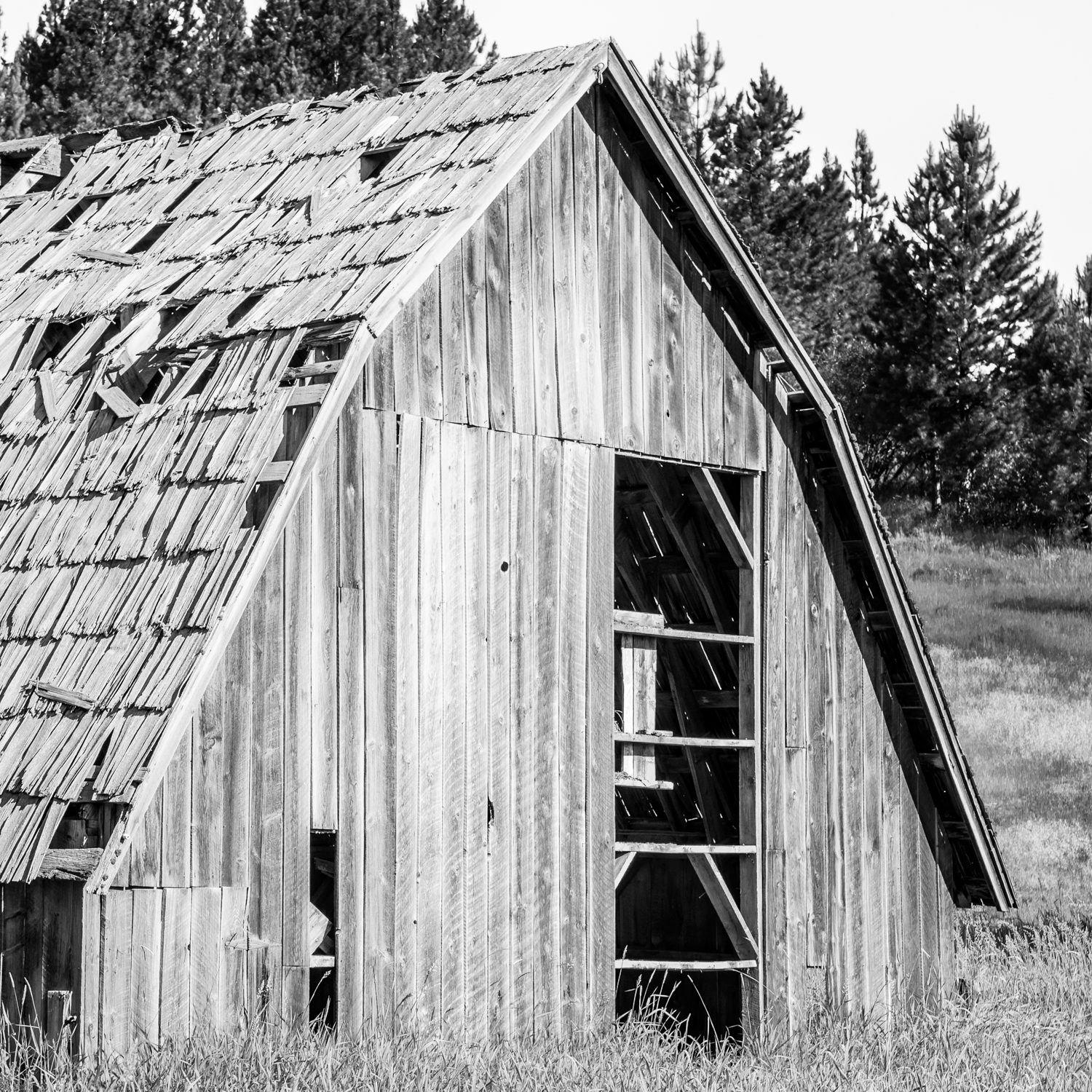 Black & White Barn Face