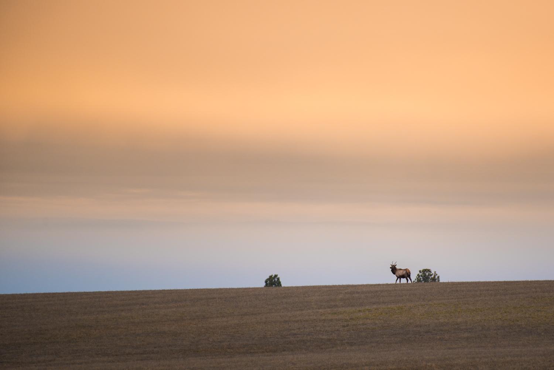 Spike Bull on the Skyline