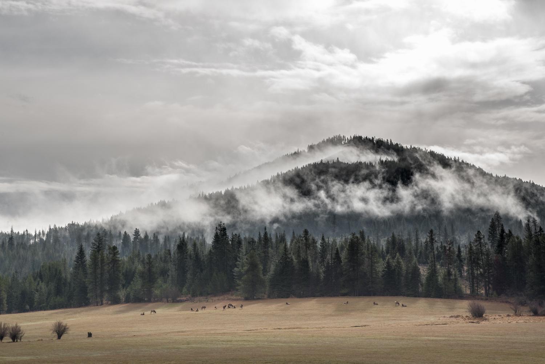 Misty Mountain Elk