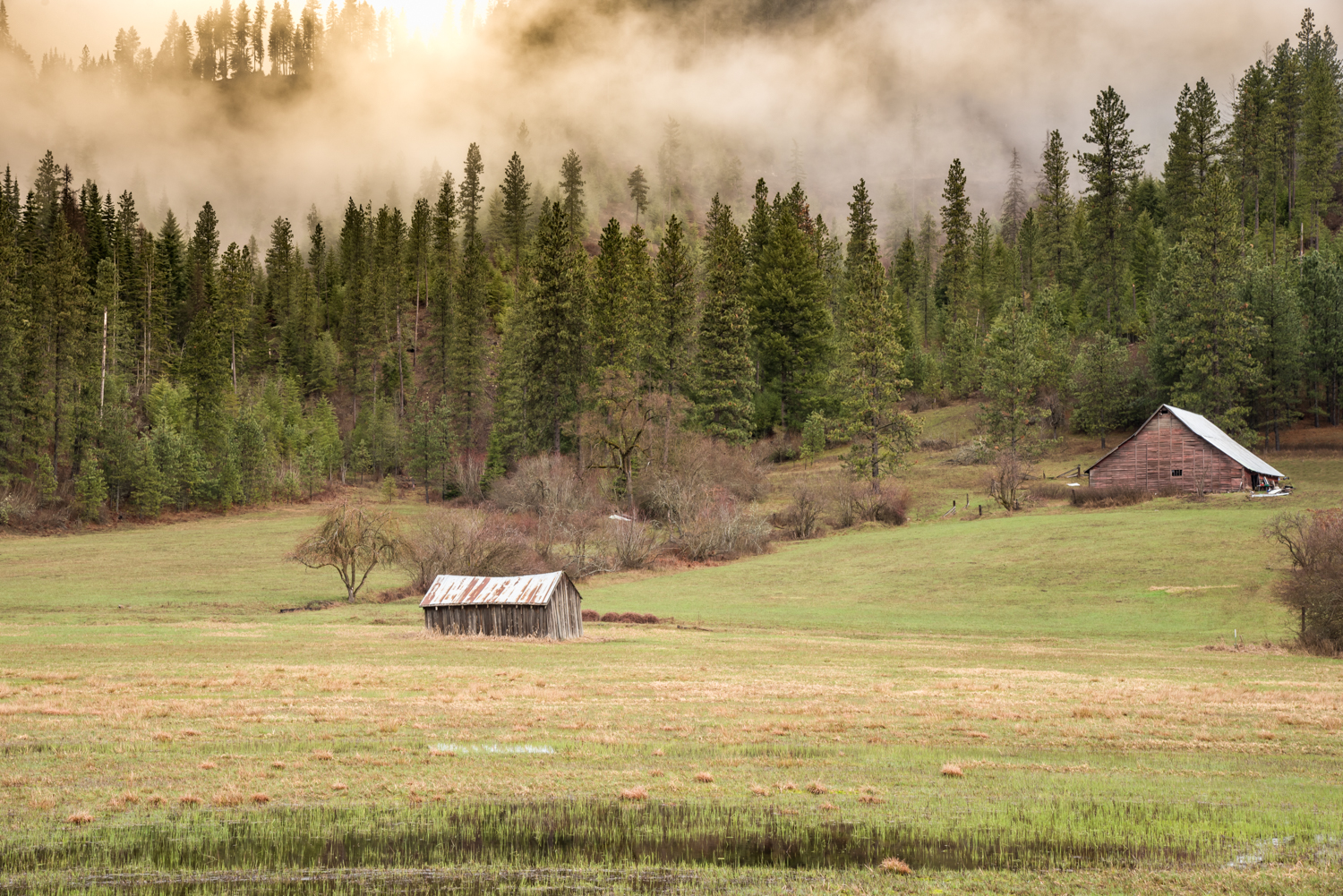 Barns and Mountain Mist