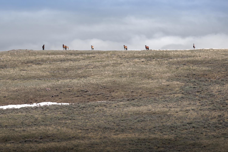High Altitude Range Horses