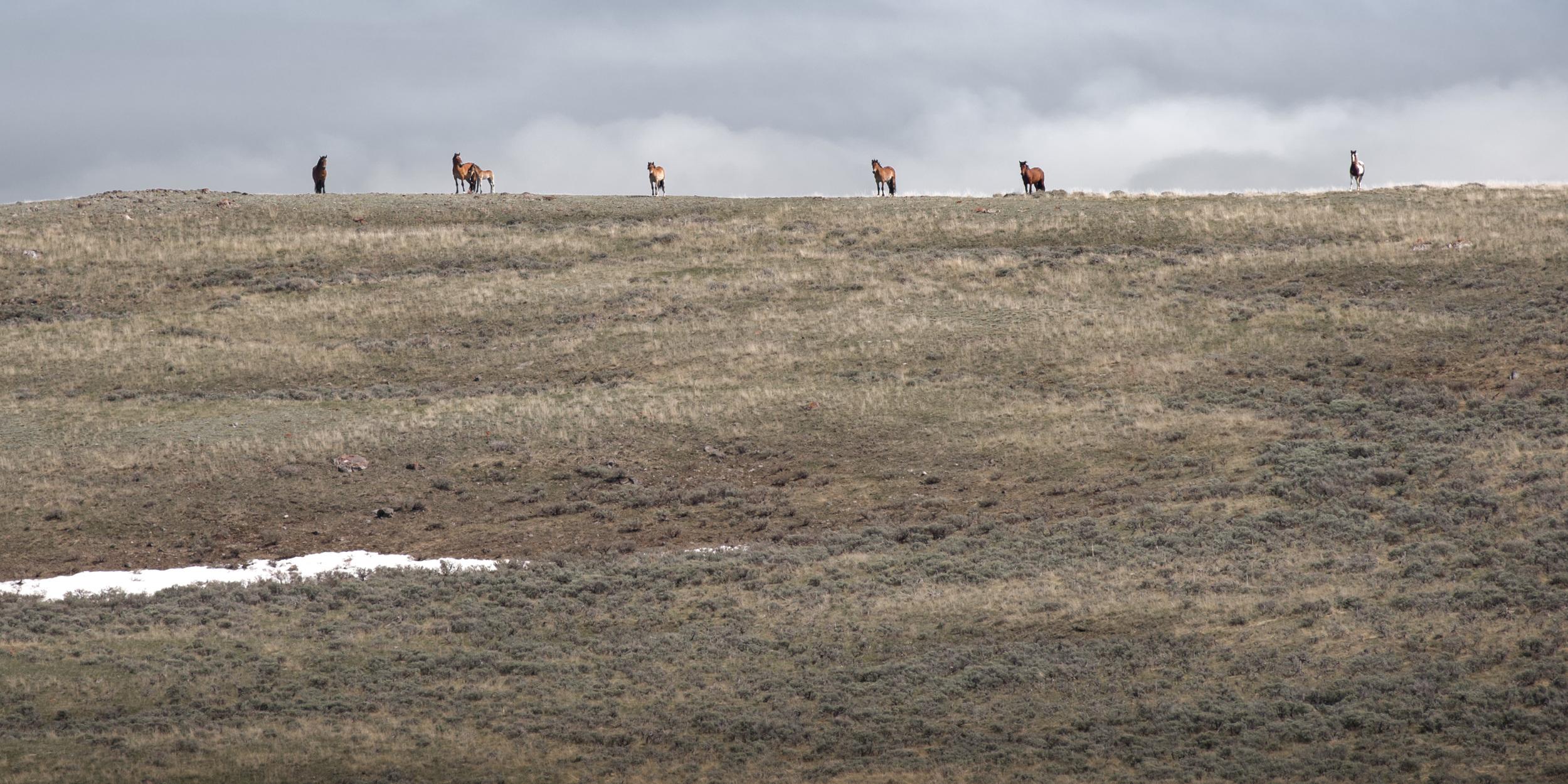 Ridgeline Mustangs