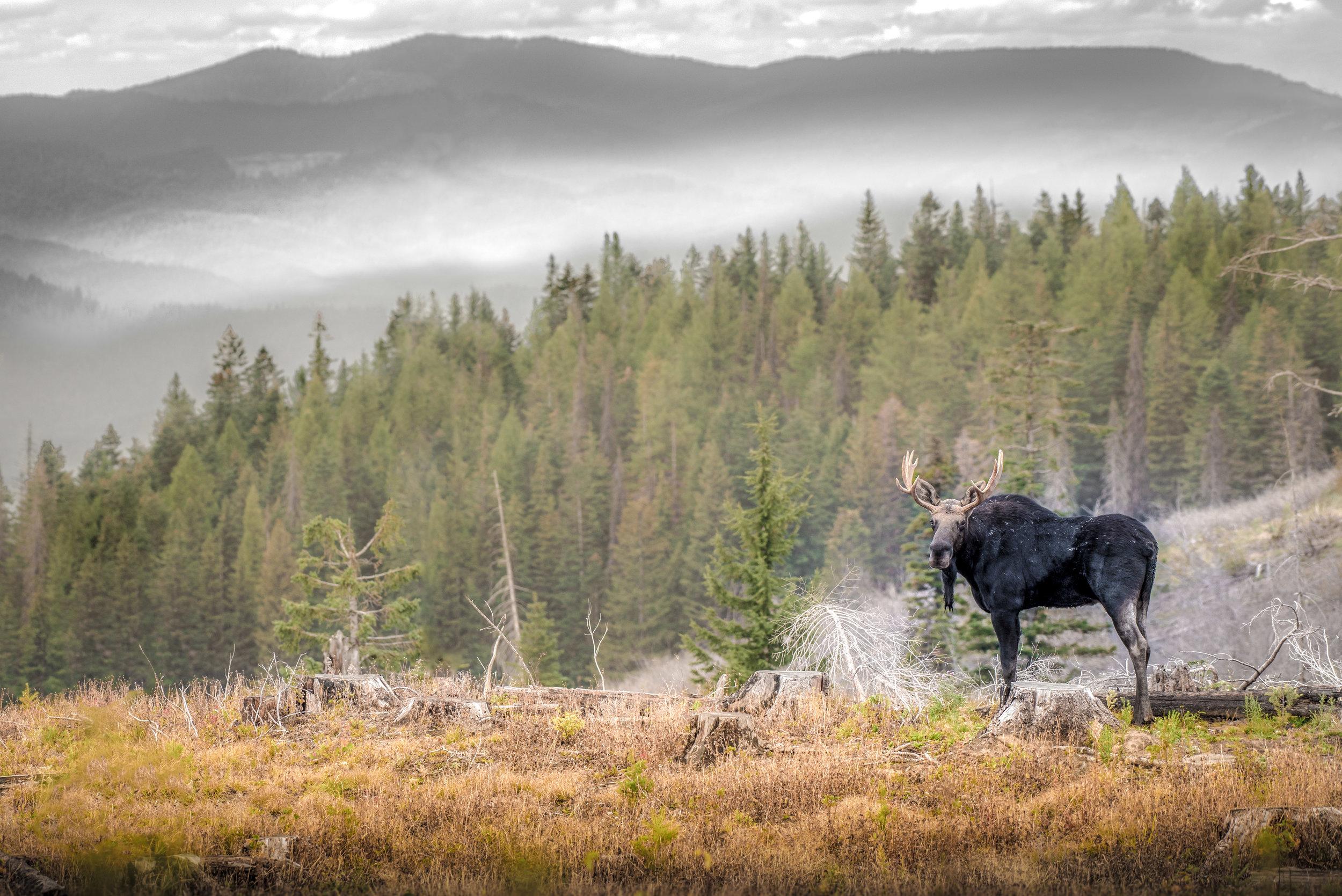 Bull o' the Butte