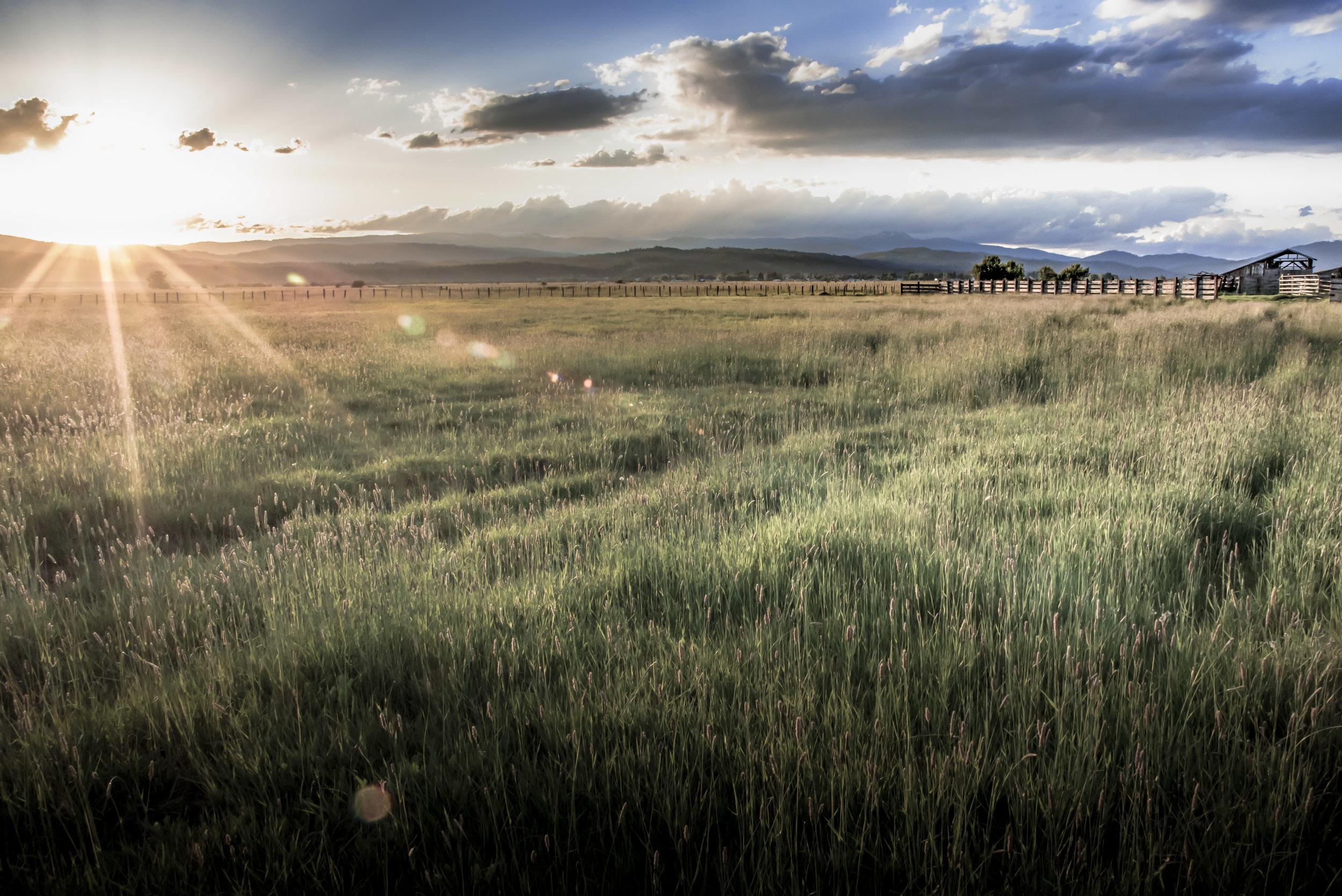 Meadows Summer Sunset