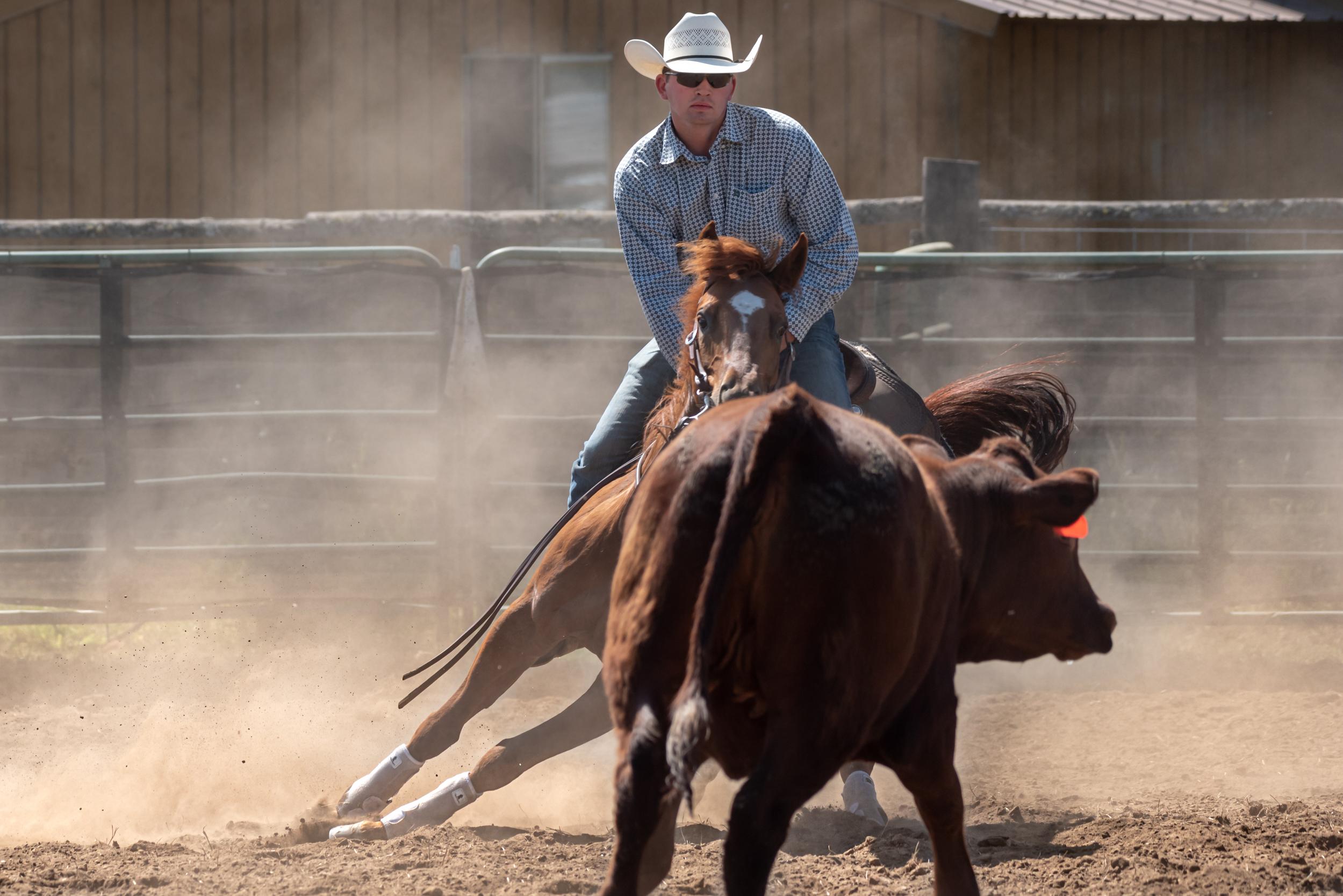 Ranch Horse Cutting