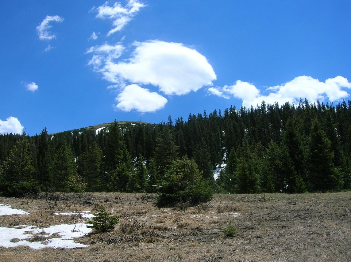 The Park. Trail Ridge Tour.