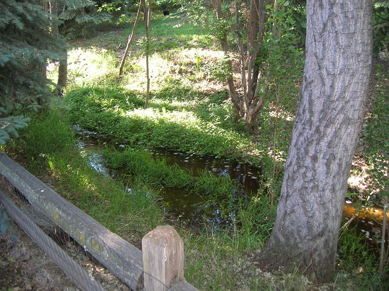 backyard_creek1.jpg