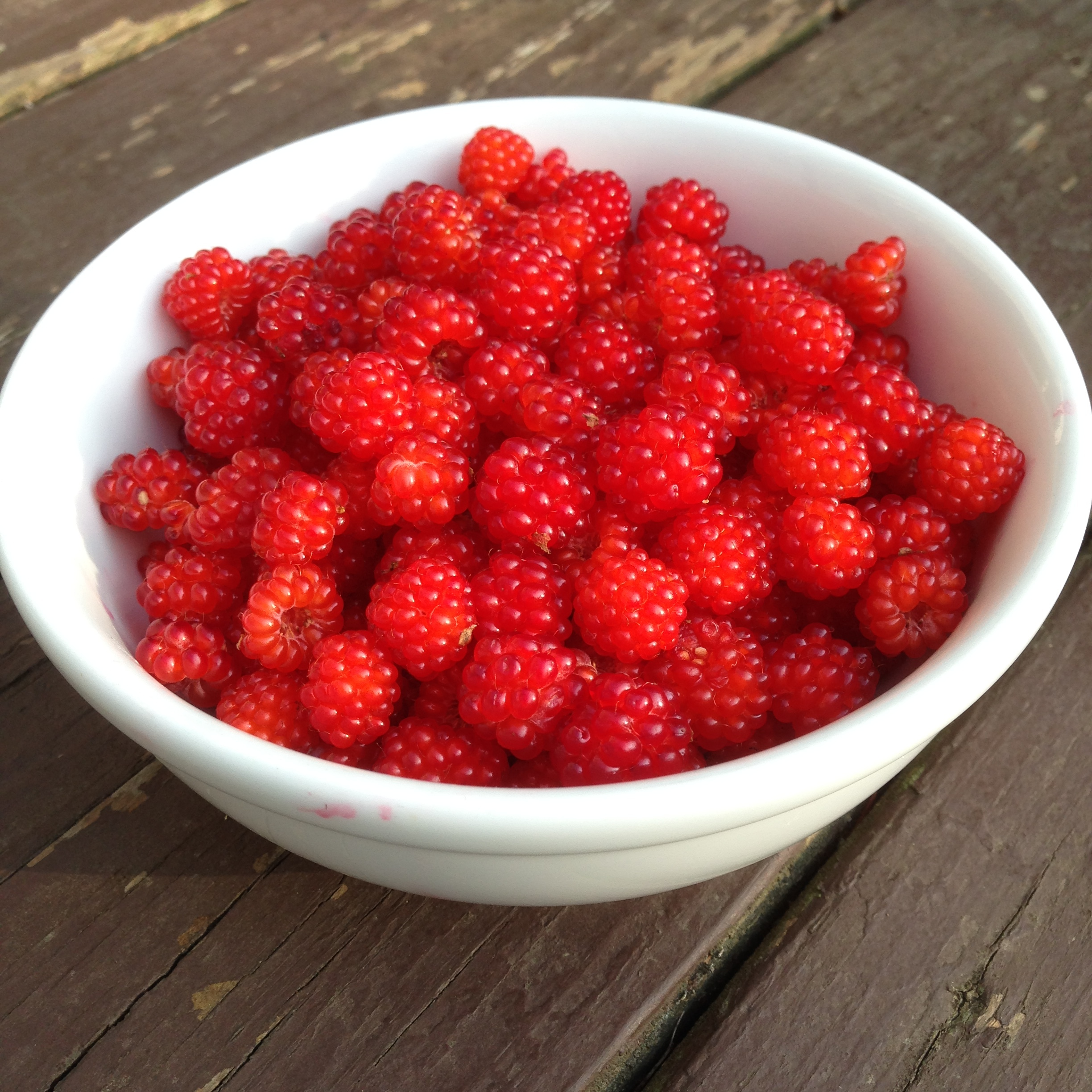 Wild raspberries from our own bushes!