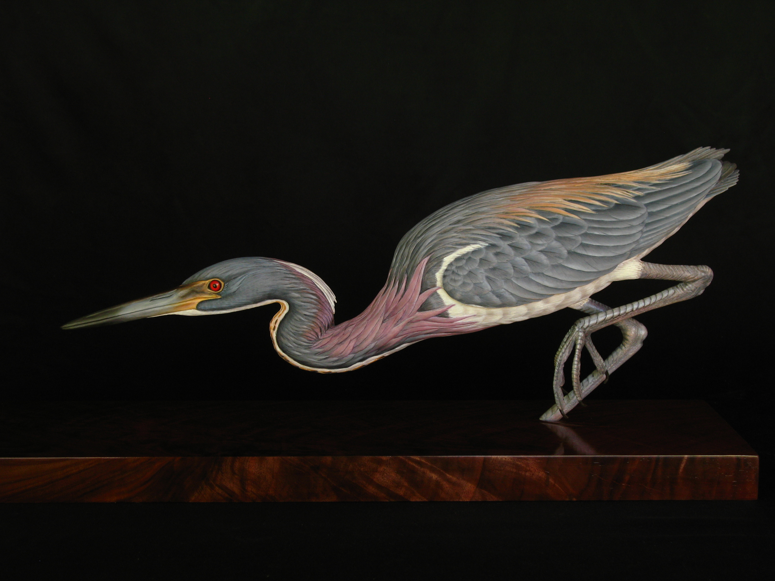 """Stilettoed Stealth"", Tricolored Heron, Life-sized, ♂"