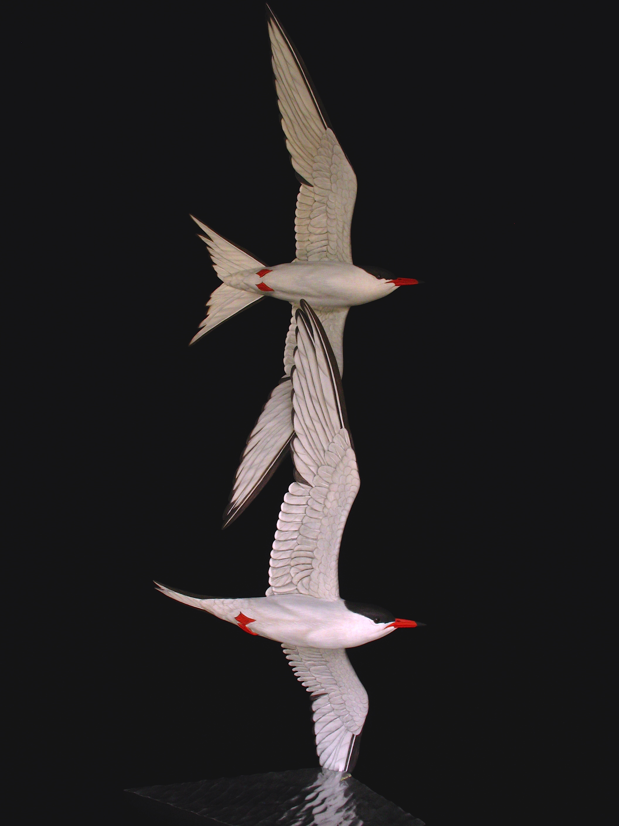 """Free Flight"", Common Terns, ♂"