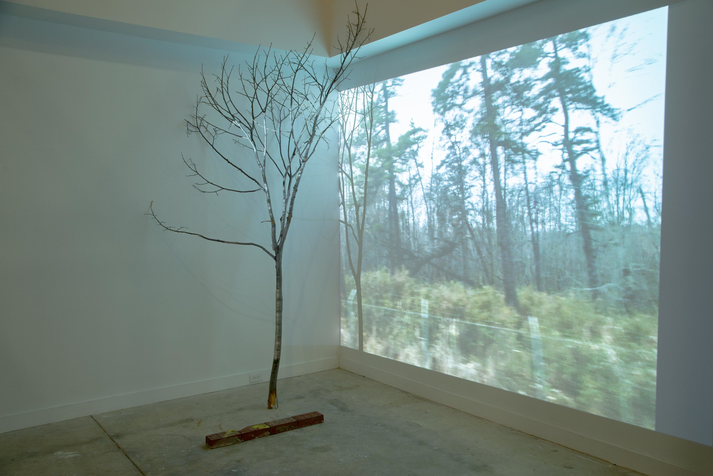 Installation view, Leidy Gallery, Baltimore