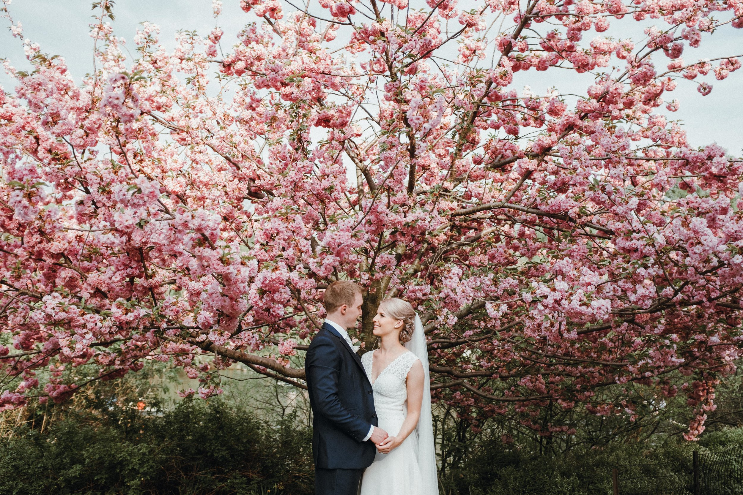 Bride and groom under blossom in Central Park New York