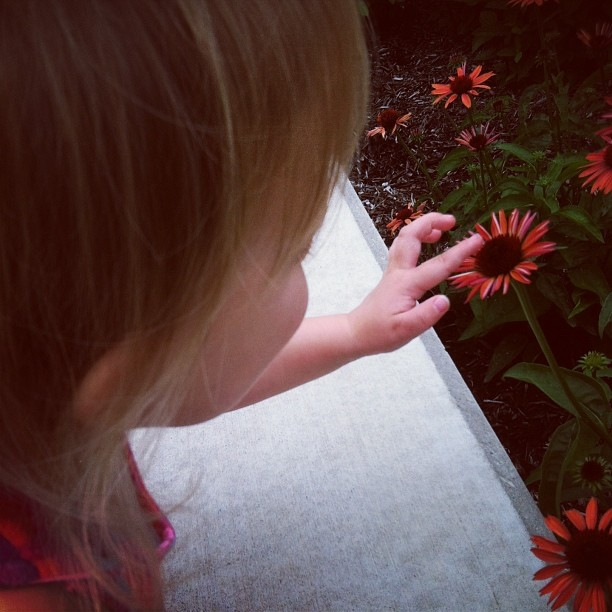 raina flower.jpg