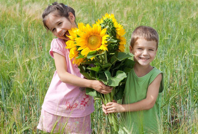 Sunflower_Harvest.jpg