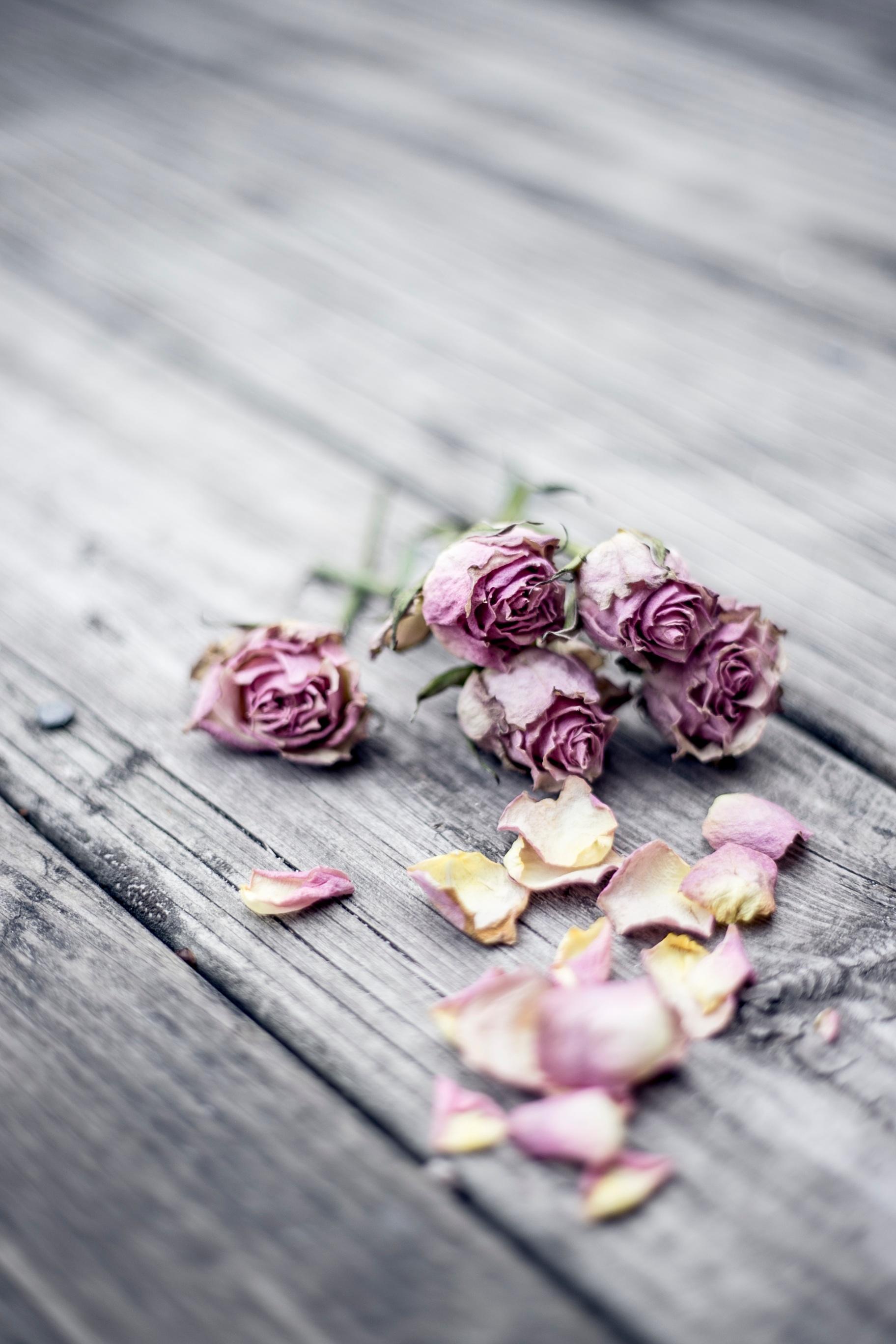 Dried_Roses.jpg