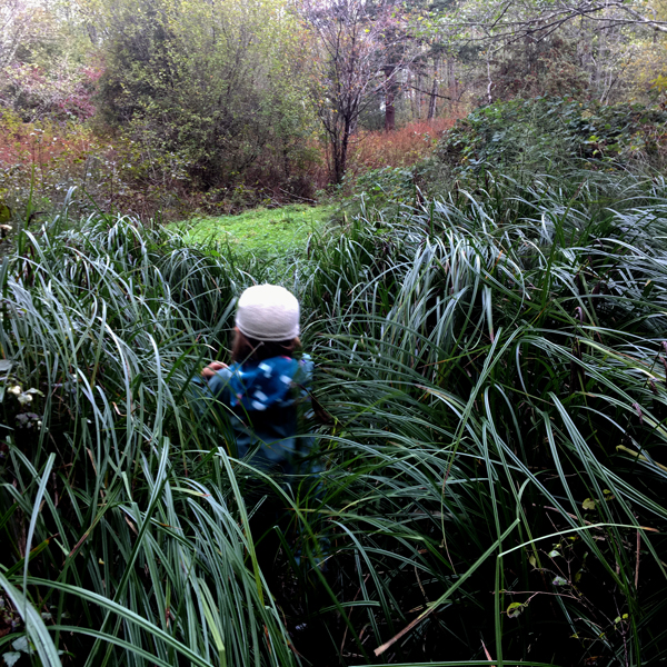 runthroughthetallgrass