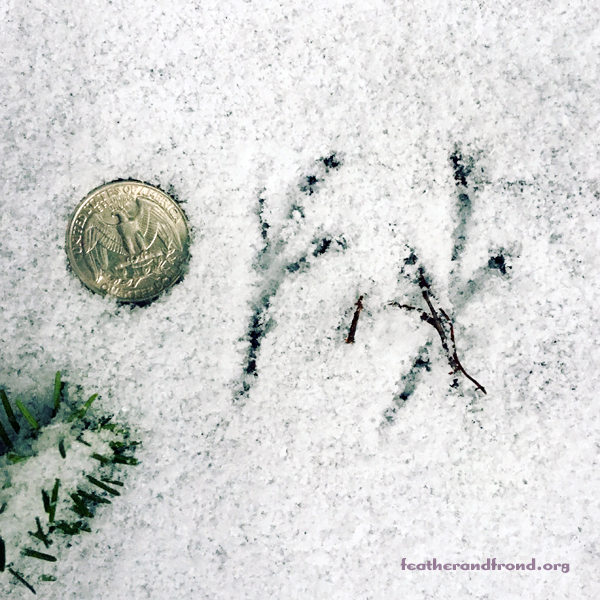 There is much magic to behold in tiny tracks as well
