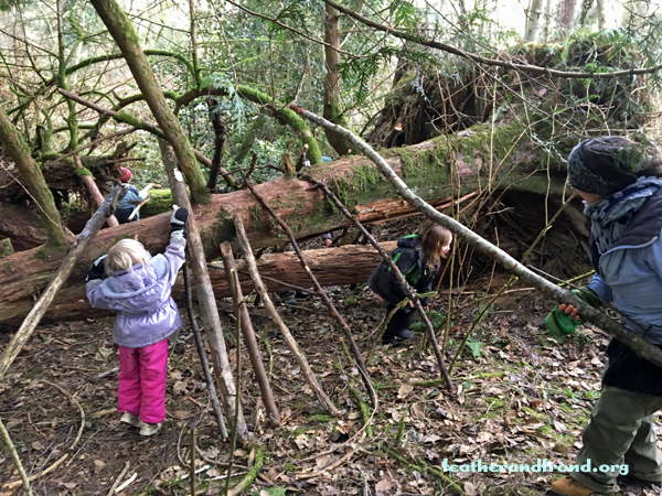 A fallen cedar provided the perfect ridge pole to build a Lean-to upon!