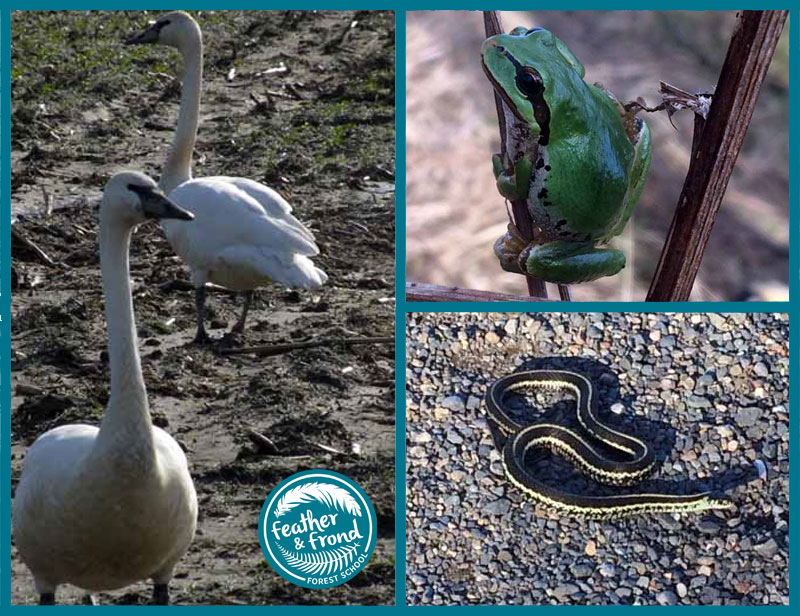 Some local residents... Have you seen any of these creatures?