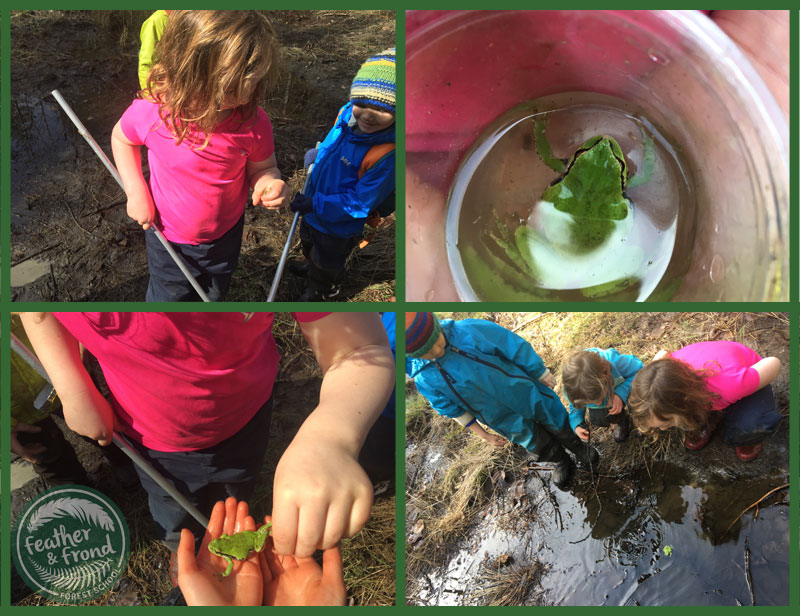 Catching frogs! (Catch and release, of course).  Such a classic spring activity and a great motivator to get outdoors.