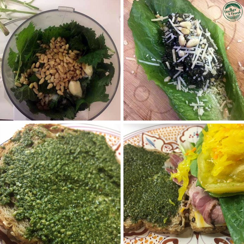 Top Left : Nettle Pesto ingredients about to get processed,  Top right : pesto on Lettuce,  Bottom photos : pat's fancy pesto sandwich!!