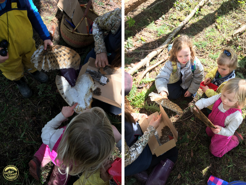 Examining some bird wings from our nature museum!