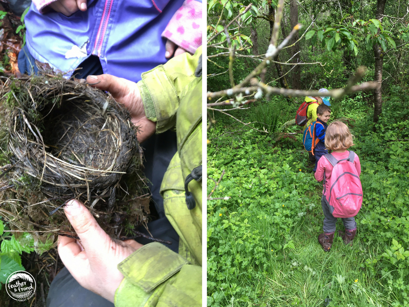 Examining a vacant Robin's nest and a deer trail!