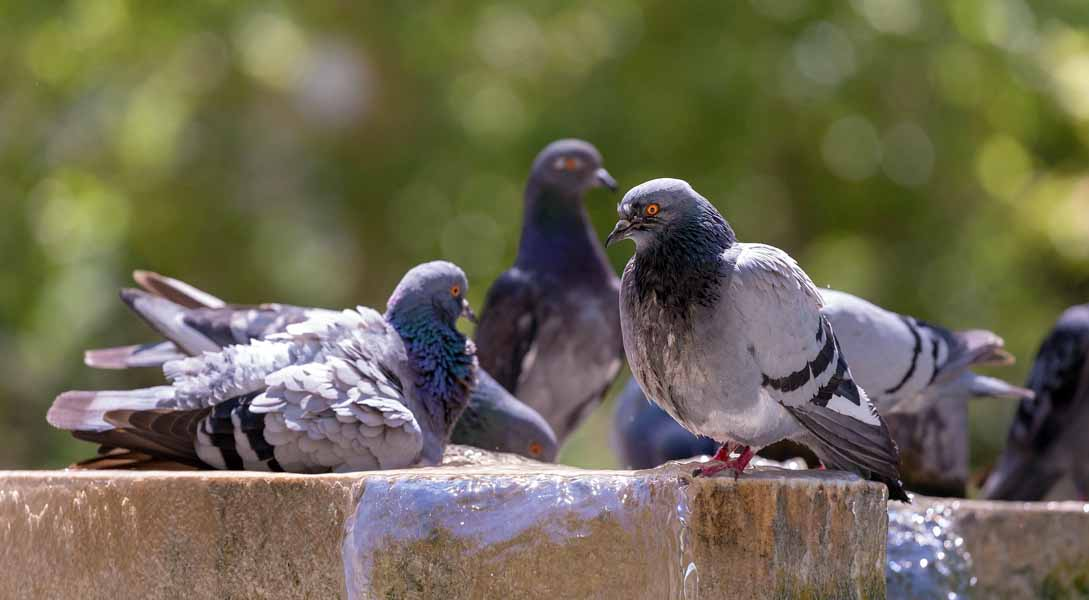 These pigeons are looking pretty relaxed, don't you think?
