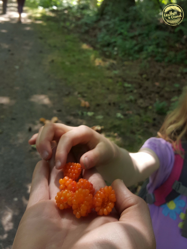 There's something really special about foraging wild berries with friends.