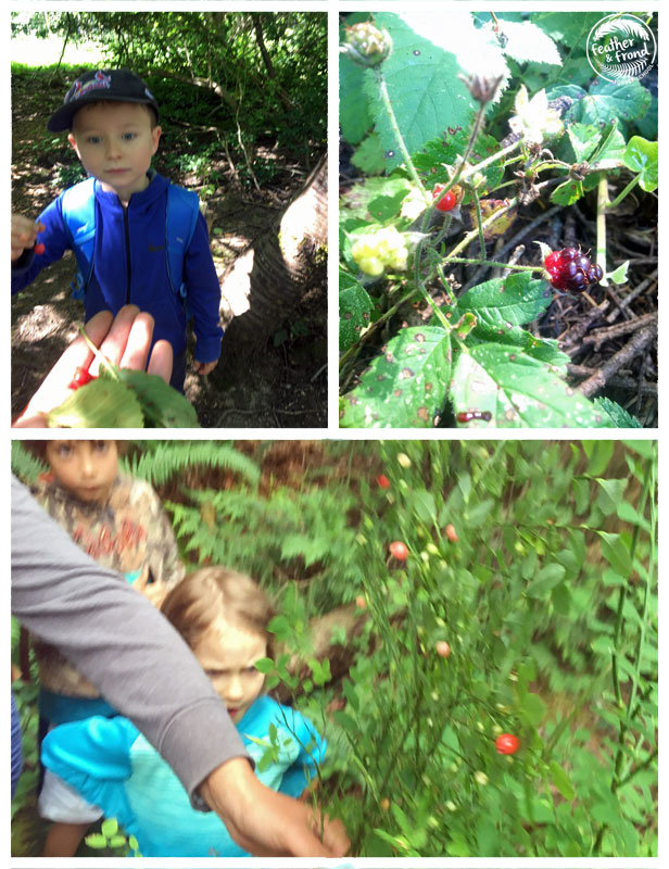 Cherries, Blackberries and Huckleberries!  Melissa shows the kids how to ID a huckleberry -- look at all the young berries underneath! What shape is red huckleberry's stem?