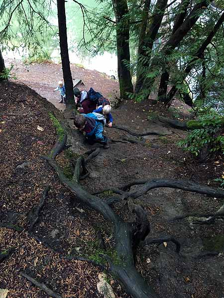 Using tree roots and strong leg muscles to climb