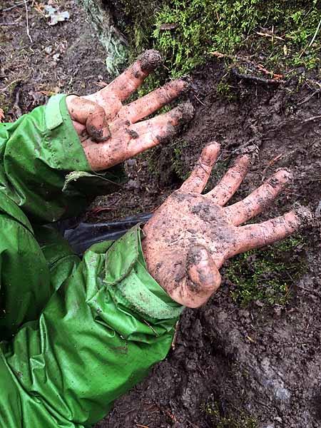 Dirty Raccoon Hands