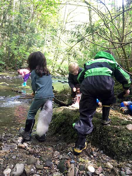 The Fox Walkers love building dams on the creek!