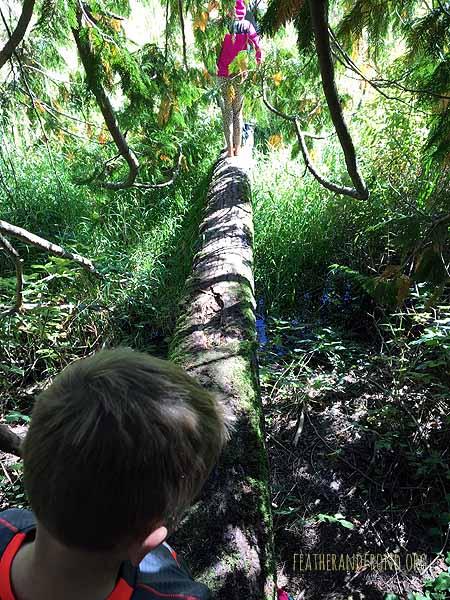 Magic Cattail Land!