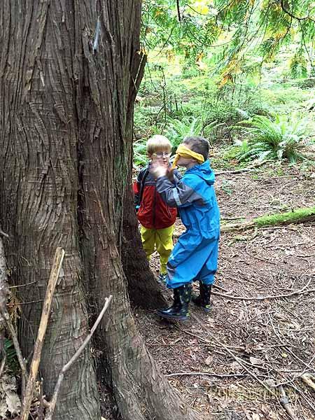 Playing Meet-a-Tree.