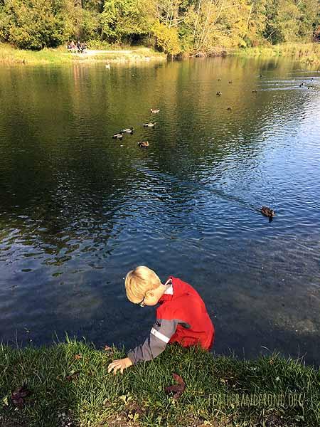 Observing Mallards at Derby Pond