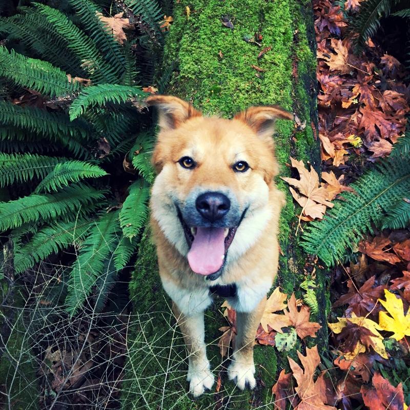 Leo the Dandelion, our guest Dog Nose Instructor