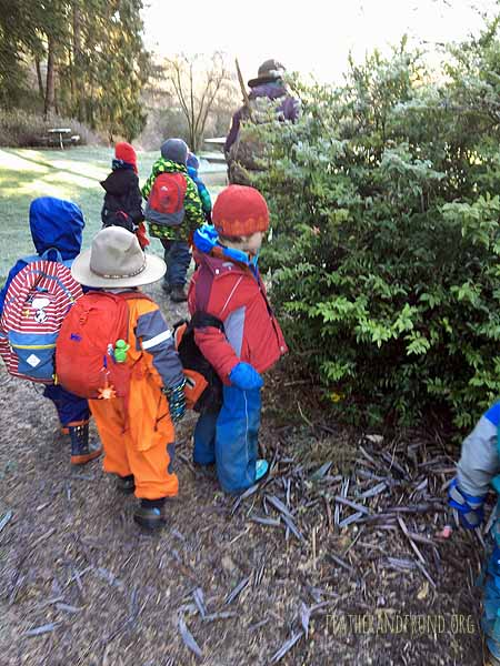 searching for frosty Evergreen Huckleberries