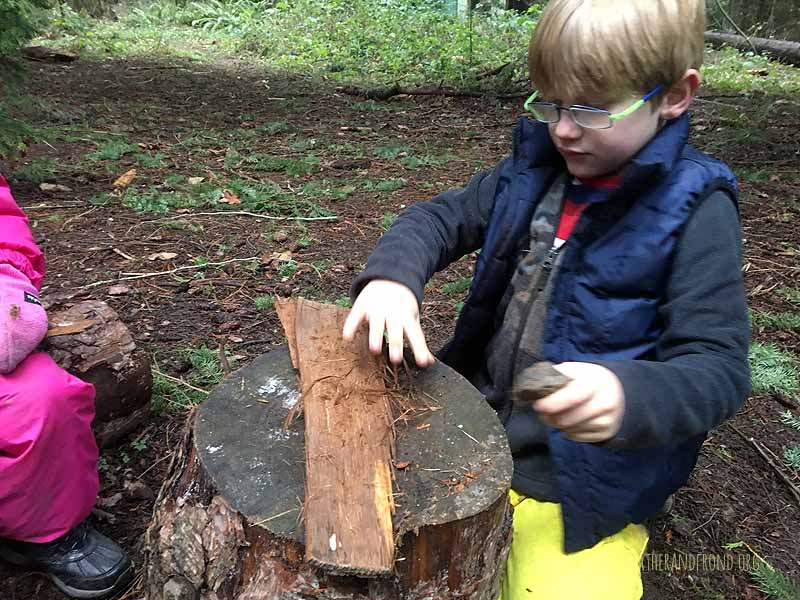 Scraping inner bark of Cedar for a tinder bundle!