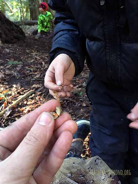 There's a seed inside the Samara fairy!