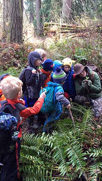 Getting to know Stinging Nettle!