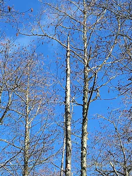 There's a woodpecker drumming up there!