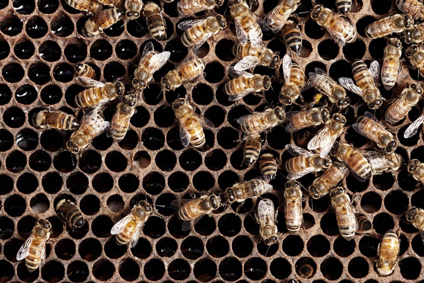 Editorial-ABP-beehive-university-of-texas.jpg